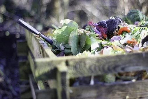 Scraps ready for composting